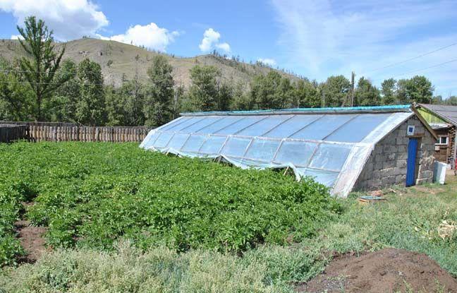 Le Geres permet à des petits agriculteurs de Mongolie d'utiliser des serres solaires passives pour le maraîchage. - Camille NEGRE / GERES