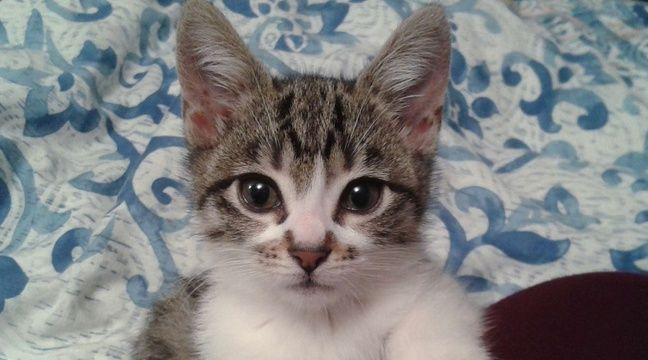 narbonne des dizaines de chats meurent empoisonn s par un m lange liquide de refroidissement et. Black Bedroom Furniture Sets. Home Design Ideas