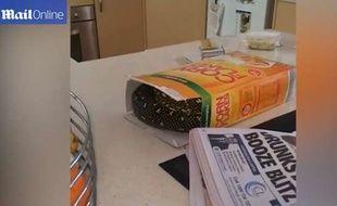 Capture d'écran d'une vidéo du «Daily Mail» montrant un serpent caché dans une boîte de céréales, à Sydney.