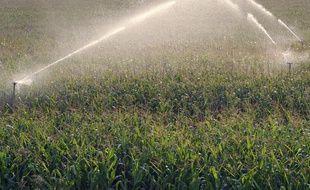 L'atrazine est notamment  est utilisé pour désherber les champs de maïs. (Photo illustration).
