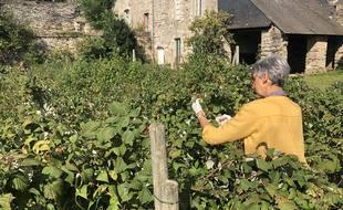 A Vitré, les membres de l'association Tous au verger s'invitent chez des particuliers pour cueillir des fruits non ramassés.