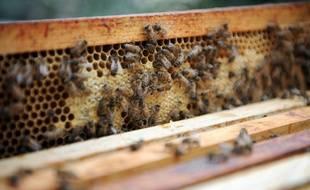 Une ruche de 40.000 abeilles installée en Ile-de-France (image d'illustration).
