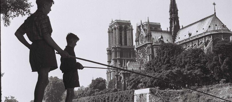 Des enfants pèchent dans la Seine face a la Cathédrale Notre-Dame en 1950.