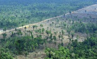 """Greenpeace a affirmé mardi que l'ambitieux programme de lutte contre la déforestation lancé par l'Indonésie avec le soutien financier de la Norvège était menacé d'être """"pris en otage"""" par les producteurs d'huile de palme et de bois."""