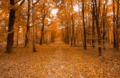Illustration : Une forêt en automne.