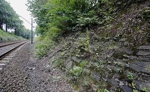 Site potentiel où aurait été enterré le train nazi, le 28 août dans le sud-ouest de la Pologne.