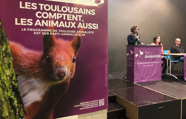 Municipales 2020 à Toulouse: Pigeons «gazés» et crustacés... On a assisté à un meeting du Parti animaliste (qui sort les griffes)
