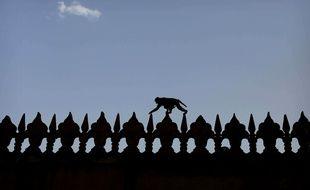 Un singe se balade sur la corniche d'un bâtiment au Taj Mahal, en Inde (illustration).