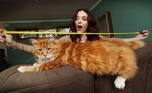 Omar, le chat australien qui mesure 1m20