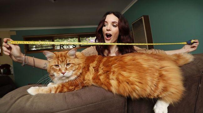 Gros Chat Du Monde on vous présente omar, le (futur) plus grand chat du monde qui
