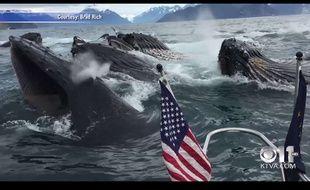 Capture d'écran d'une vidéo tournée par Brad Rich, un pêcheur qui a rencontré un ban de baleines à bosse, le 5 juillet 2015.