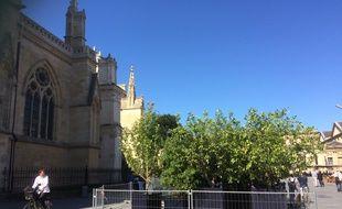 Une cinquantaine d'arbres en pot venant de pépinières va être installée sur la place Pey-Berland.