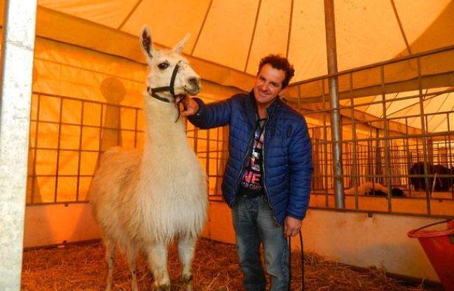 Serge le lama dans son box avec John Beautour, le directeur du cirque.