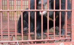 Quatorze ours ont été sauvés du commerce illégal de la bile au Vietnam et transportés dans un centre de secours près de Hanoï, a-t-on appris mardi auprès d'une organisation de protection de la faune sauvage.