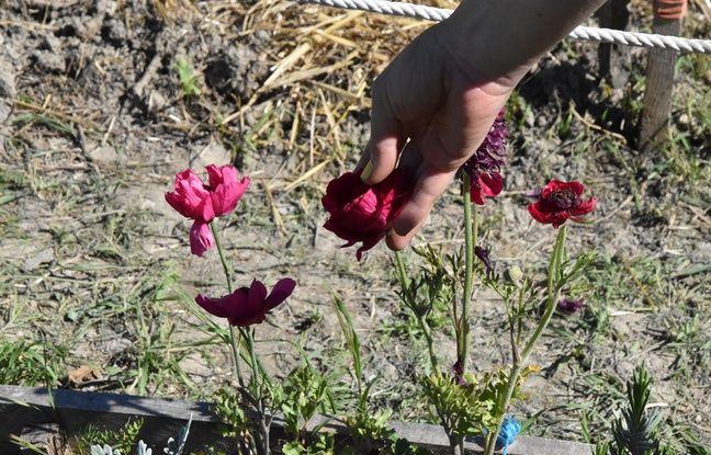 Les citadins ne plantent pas seulement des semis d'oignons ou tomates, mais aussi des fleurs et herbes aromatiques pour attirer les insectes pollinisateurs.