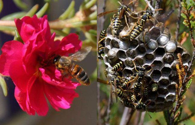 comment reconna tre une gu pe d 39 une abeille. Black Bedroom Furniture Sets. Home Design Ideas