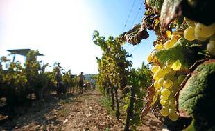 La Provence produit une moyenne de 141 millions de bouteilles de rosés AOC chaque année.