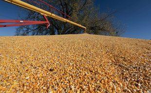 Illustration de grains de maïs avant leur transport dans un silo.