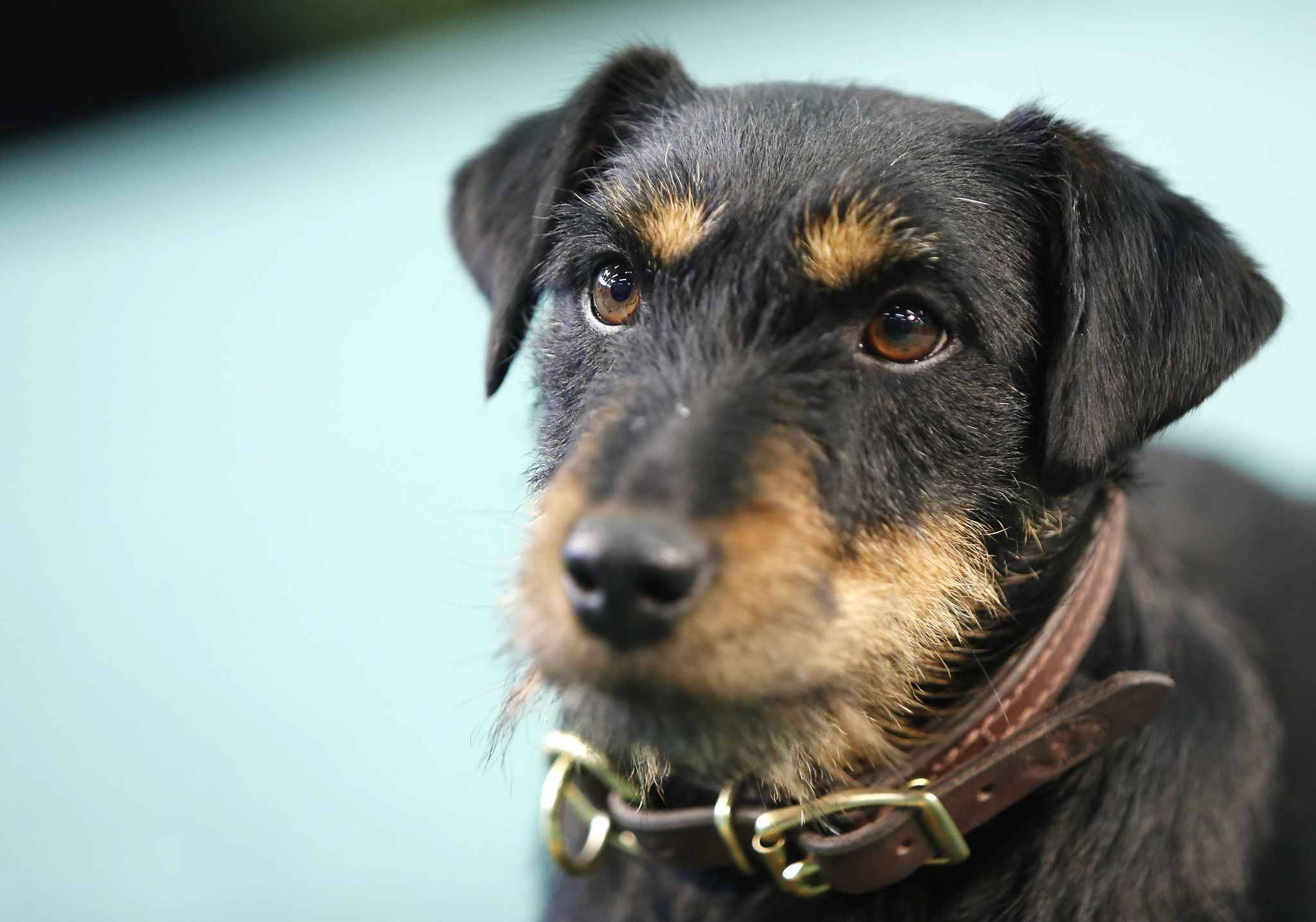Dordogne. Coincée dans un terrier, la chienne introuvable depuis 7 jours