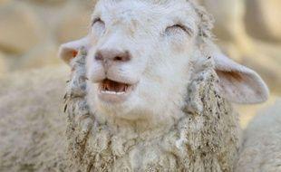 Ce mouton vit au Japon à Kobe et sourit tout le temps.