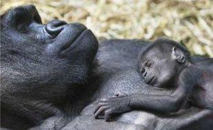 Mamitu, une gorille femelle de 30 ans et son bébé d'une semaine au zoo de Zurich, Suisse, le 23 juillet 2007.