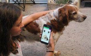 Votre animal est perdu ? L'application doit permettre de lancer une alerte en moins de deux minutes