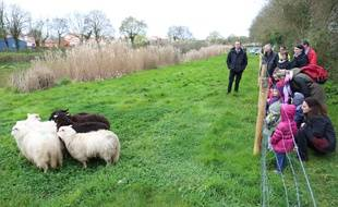Des enfants ont accueilli les moutons, à Bouguenais.