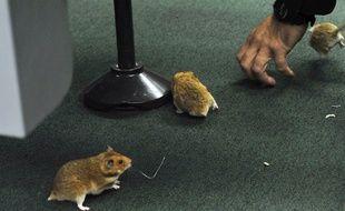 Les rongeurs, amateurs de câbles, présentent un danger certain... (photo d'illustration)