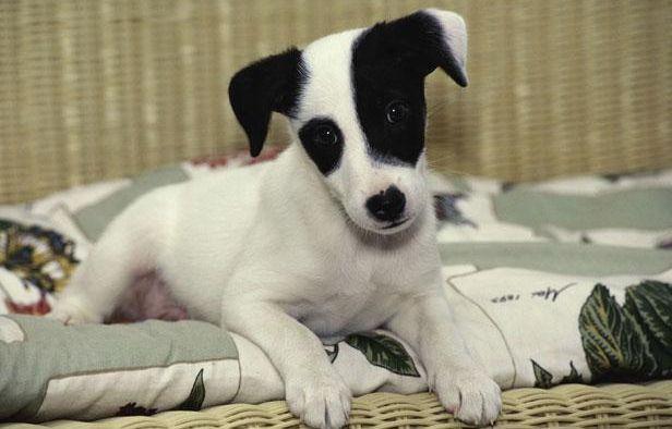 var l homme soup onn d avoir tortur un chien avec un tire bouchon devant le tribunal. Black Bedroom Furniture Sets. Home Design Ideas