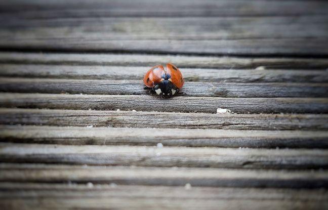 Les photos en macro du Mi 11 séduisent la rétine.