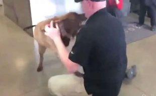 Capture d'écran de la vidéo des retrouvailles entre le sergent Jason Bos et son chien-renifleur, Cila, à Chicago le 30 avril 2014.