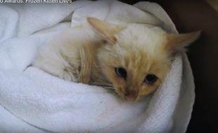 Le petit chat congelé est revenu à la vie.