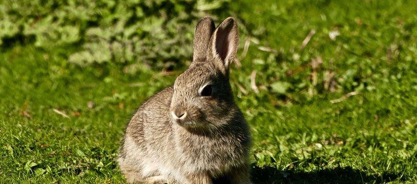 Illustration d'un petit lapin.