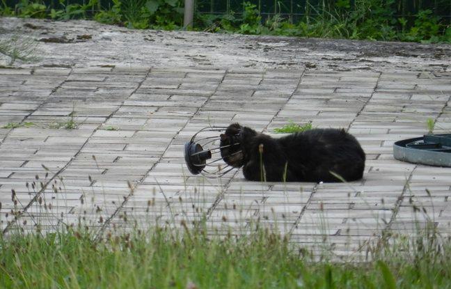 Bas-Rhin: Un chat passe deux mois la tête coincée dans une lampe avant de se faire secourir