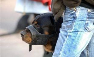 """Les propriétaires de chiens dangereux devront désormais obtenir un """"permis de détention"""" délivré par le maire de la commune où ils résident, avec l'adoption définitive jeudi par le Parlement d'un projet de loi en ce sens."""