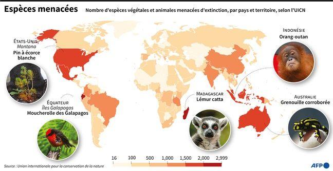 Carte du monde montrant, par pays, le nombre d'espèces végétales et animales menacées d'extinction, selon l'UICN.