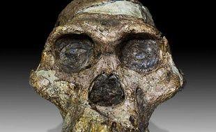 Le crâne de l'Australopithèque «Mrs Ples» conservé au Transvaal Museum de Pretoria, en Afrique du Sud.