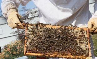 apiculteur bordeaux