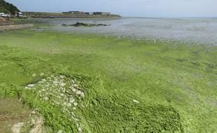 Des algues vertes sur la plage du Valais, à Saint-Brieuc, le 17 juillet 2019.