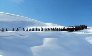 """Quelque 50 personnes sont mortes et 145 sont portées disparues, """"présumées mortes"""", emportées par une avalanche dans le Badakhshan, une province du nord-est de l'Afghanistan montagneuse et enclavée, soumis à un hiver exceptionnellement rude, a annoncé l'ONU samedi."""