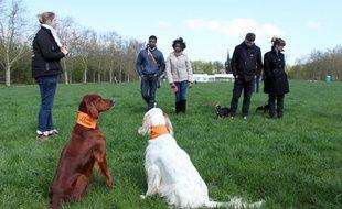 L'Ecole des chiens forme 2.000 chiens par an, ici un cours à Vincennes, le 20 avril 2013.