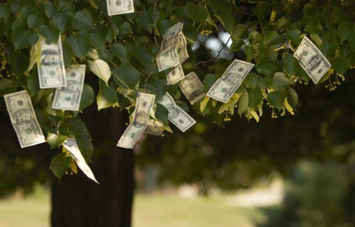 Photographie illustrant le contraire du dicton «L'argent ne pousse pas sur les arbres». – Todd Muskopf/NEWSCOM/SIPA
