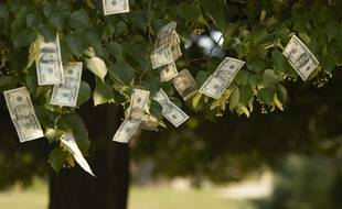 Photographie illustrant le contraire du dicton «L'argent ne pousse pas sur les arbres».