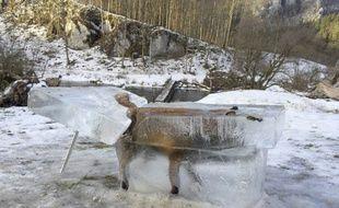 Un renard a été pris dans la glace