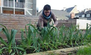 On pourra bientôt faire pousser des poireaux en plein cœur de ville à Rennes, comme ici sur la terrasse de la Maison de la consommation et de l'environnement