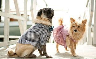 28% des Français ont déjà acheté un vêtement pour leur chien.