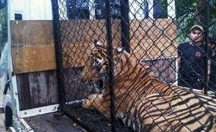 Les autorités thaïlandaises ont saisi plus de 200 animaux vivants dont des tigres, des lions, des panthères et d'autres espèces en danger au cours d'un raid contre un réseau de trafiquants, a indiqué la police jeudi.