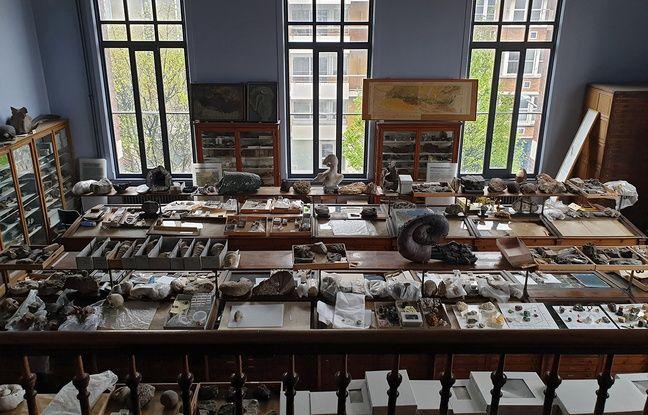 Une des salles des réserves du musée d'Histoire naturelle de Lille.