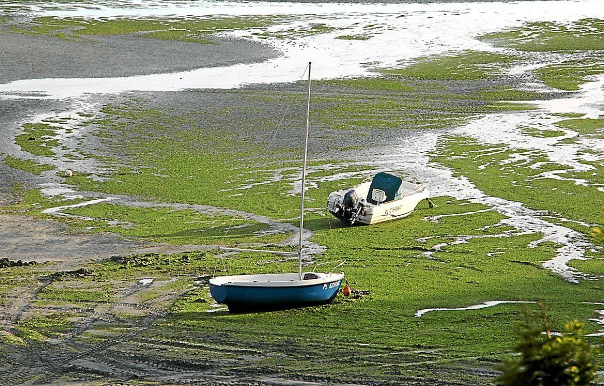 Des algues vertes échouées sur une plage de Saint-Michel-en-Grève en 2011. – Le Saux Lionel / Sipa
