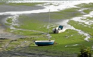 Des algues vertes échouées sur une plage de Saint-Michel-en-Grève en 2011.